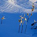 Milkweeds In The Snow by Dan  Meylor