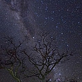 Milky Way During The Dry Season by Piotr Naskrecki