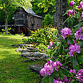 Mill And Rhododendrons by Larry Ricker