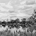 Mill Creek Marsh Serenity by Regina Geoghan