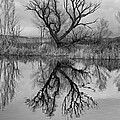Mill Pond Tree by Newman Artography
