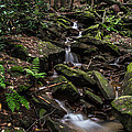 Millcreek Road Waterfall by Anthony Thomas