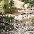 Miller Peak Trail by Stanley Morganstein