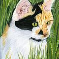 Millie The Adventurer by Sarah Dowson