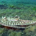 Mimic Octopus by Scubazoo/science Photo Library