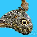 Mindo Butterfly by Al Bourassa