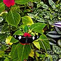 Mindo Butterfly At Rest by Al Bourassa
