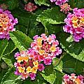 Mini Flowers by Tara Potts