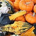 Mini Pumpkins And Gourds by Cynthia Guinn