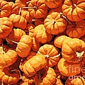 Mini Pumpkins by Beth Ferris Sale