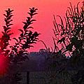 Mini Sunset by Tina M Wenger