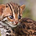 Miniature Leopard by Ashley Vincent