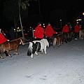 Miniature Ponys by Robert Floyd