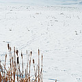 Minimalist Cattail Prairie In Colorado by Julie Magers Soulen