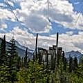 Mining Plant Fractal by Matthew Naiden