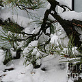 Minnesota Bonsai by Susan Herber