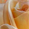 Mirage Rose by Linda Dunn