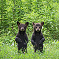 Mirror Image Cubs by W. Drew Senter, Longleaf Photography