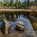 Mirror Lake Threesome Yosemite by Terry Garvin