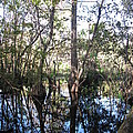 Mirroring The Swamp by Christiane Schulze Art And Photography