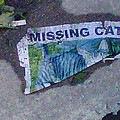 Missing Cat by Dawn Sloane