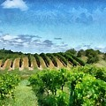 Mission Peninsula Vineyard Ll by Michelle Calkins