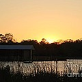 Mississippi Bayou 11 by Michelle Powell