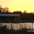 Mississippi Bayou 15 by Michelle Powell