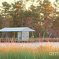 Mississippi Bayou 3 by Michelle Powell