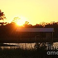 Mississippi Bayou 5 by Michelle Powell