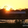 Mississippi Bayou 6 by Michelle Powell