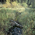 Mississippi River Headwaters by Garry McMichael