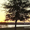 Mississippi Sunset 12 by Michelle Powell