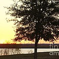Mississippi Sunset 13 by Michelle Powell