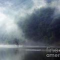Mist by Roman Milert