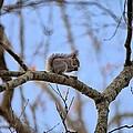 Mister Squirrel by Gordon Elwell