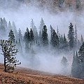 Mists Of Yellowstone by Tranquil Light  Photography