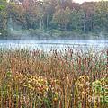 Misty Autumn Morning by Deborah Smolinske