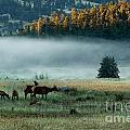 Misty Breakfast by Ray K