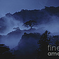 Misty Cloud Forest At Dusk by Gregory G Dimijian MD