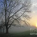 Misty Dawn by Julia Gavin