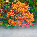 Misty Fall Tree by Anthony Sacco