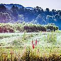 Misty Field In Blue Ridge Mountain Farmlands by Mela Luna