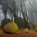 Misty by Jorge Maia