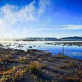 Misty Lagoon by Brian Hayashi