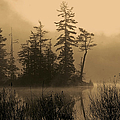 Misty Lake And Trees Silhouette by Peggy Collins