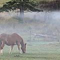 Misty Meadow by Randy Hall