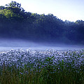 Misty Morning At Vally Forge by Bill Cannon