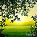 Misty Morning by Bedros Awak