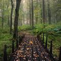 Misty Morning by Christian Lindsten